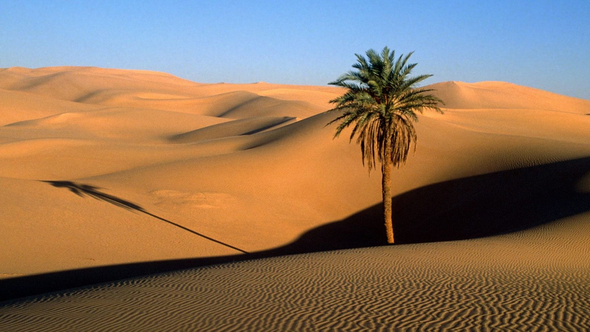 Palm tree in desert